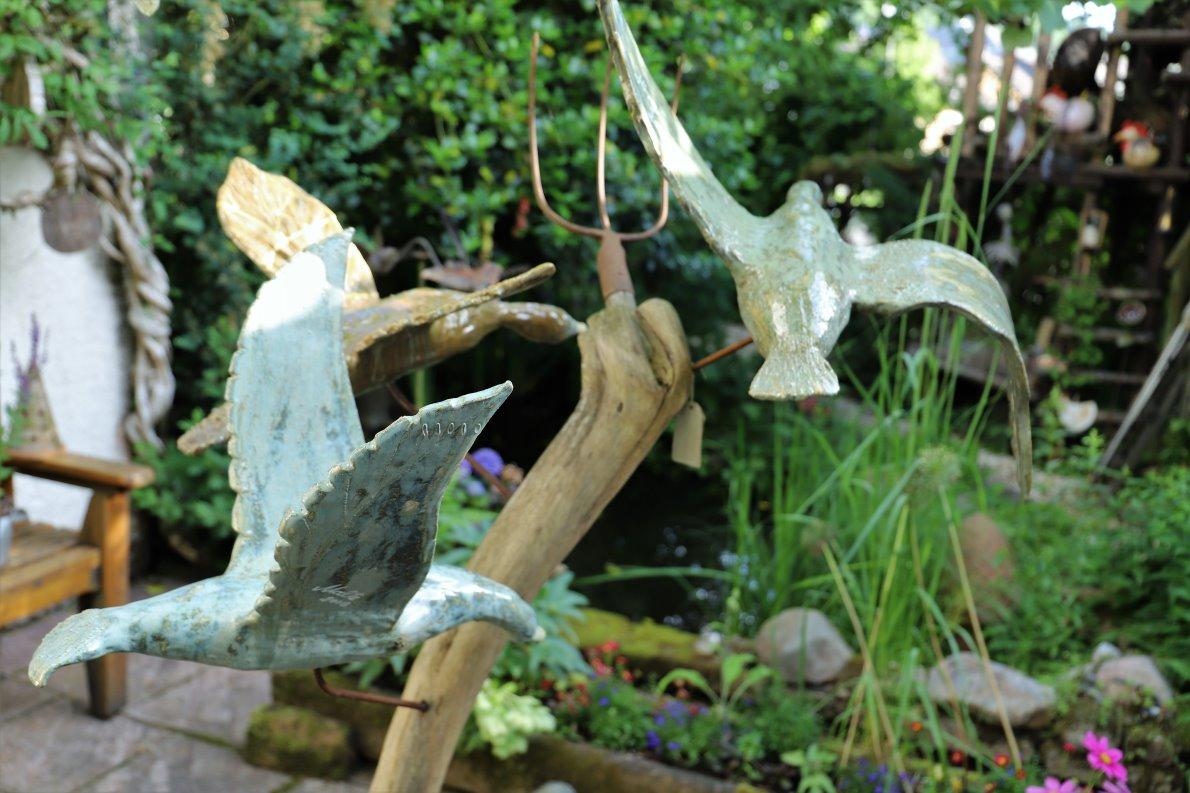 Die drei fliegenden Schwäne sind inzwischen erwachsen und in alle Himmelsrichtungen davongeflogen. (Foto: Knut Kuckel)