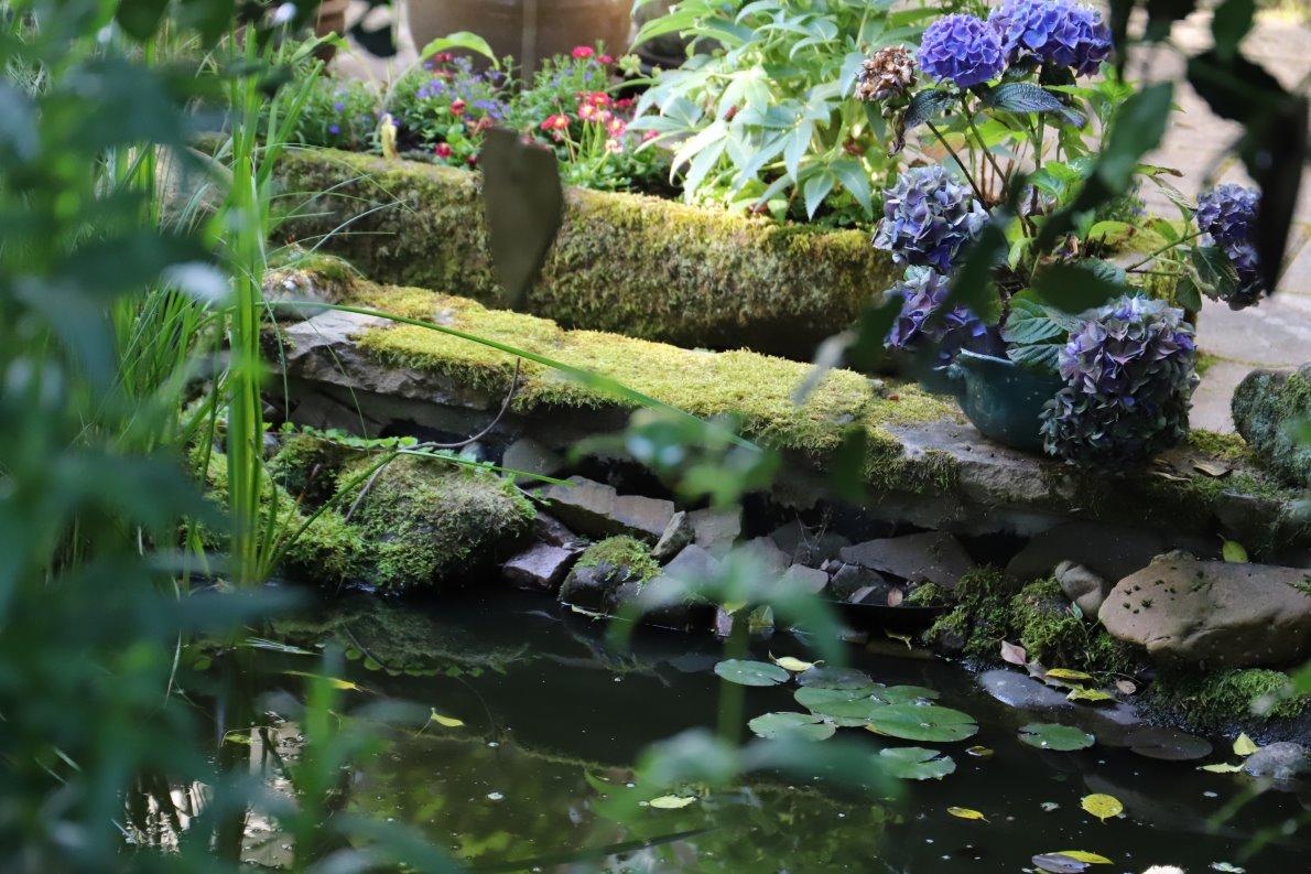 Dieser Garten tut allen gut, die ihn erleben dürfen. Er darf wachsen und das gefällt ihm. (Foto: Knut Kuckel)